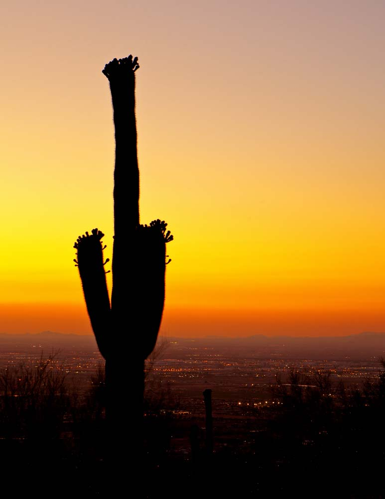 Island Trader Vacations Reviews Tucson A Must See Destination